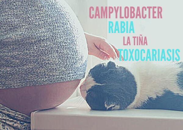 los gatos y el embarazo de la mujer
